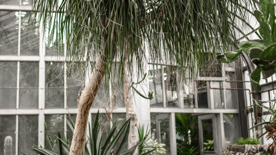 Waar moet ik op letten bij het aanschaffen van een tuinhuis?