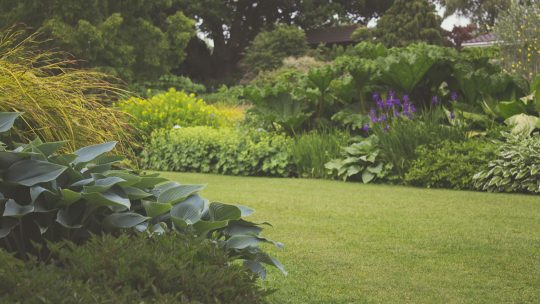Waar je op moet letten als je een nieuwe tuin aanlegt